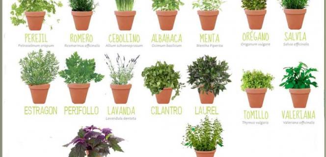 Cultivo de plantas arom ticas propiedades y usos for Cultivo de plantas aromaticas y especias